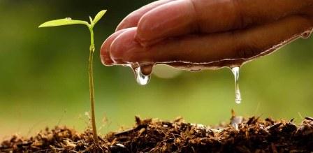 Objavljen javni poziv za dodjelu podsticajnih sredstava u poljoprivredi