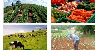 Opština uplatila podsticaje poljoprivrednicima